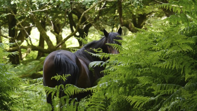 The ponies are loved by visitors and are part of the New Forest's ancient commoning system. - See more at: http://www.telltale.co.uk/news/interpretation-strategy-new-forest-project/#sthash.RK7wISBg.dpuf
