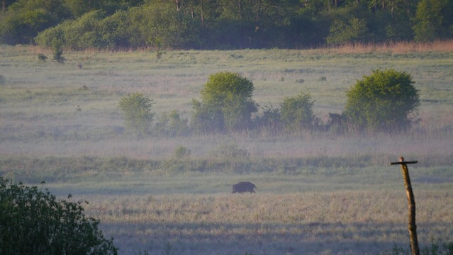 We saw wild boars from the viewing platform - a moment to remember